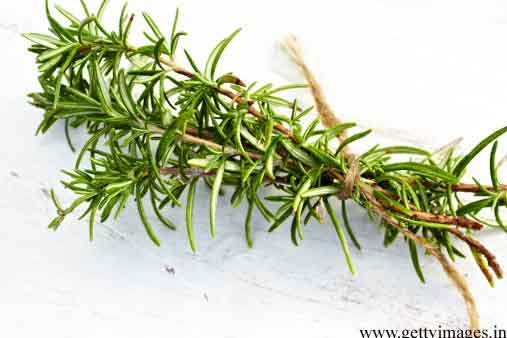 rosemary leaves for oil