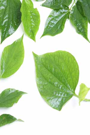 benefits of betal leaves in hindi