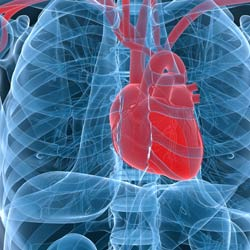 Gene Therapy to Cure Heart Failure