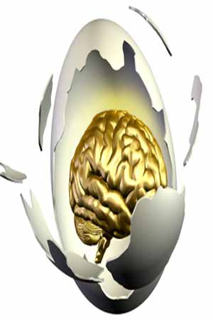 Egg And Dairy Nutrient Important For Brain