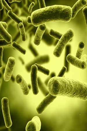 Probiotic could be harmful