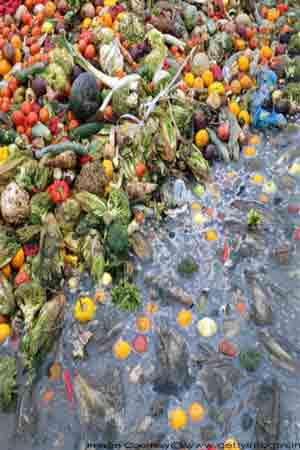 environment gets polluted by wasted food