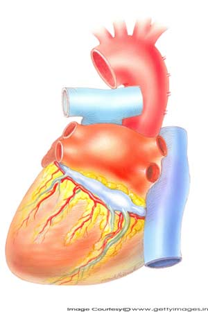 fat accumulated around heart fatal for kidney patients