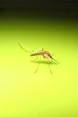 dengue myths