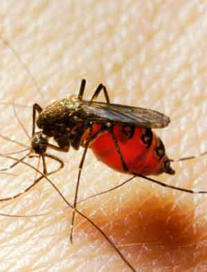 dengue and malaria treatment