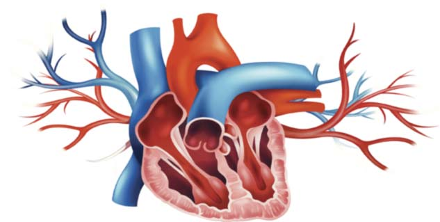 What is Mitral Valve Prolapse in Hindi