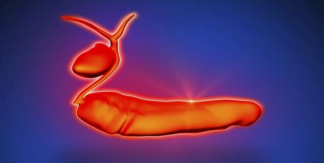 All Information About Pancreas