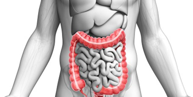digestive system in hindi