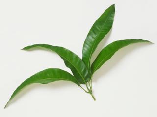 डायबिटीज से बचाएंगी ये गुणकारी पत्तियां