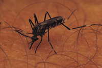 How to Diagnose Chikungunya
