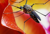 How to Prevent Chikungunya